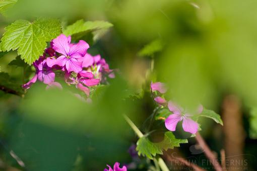 Blumen | F/4 1/250 Sek. ISO-200 50mm | 05/2012