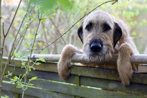 Ein Hund am Zaun | F/2.5 1/60 Sek. ISO-200 50mm | 05/2012