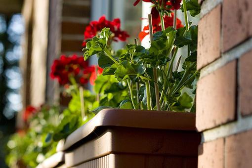 Geranien am Fenster | F/4.5 1/250 Sek. ISO-200 50mm | 05/2012